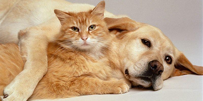 Cães, gatos, filhos ou netos