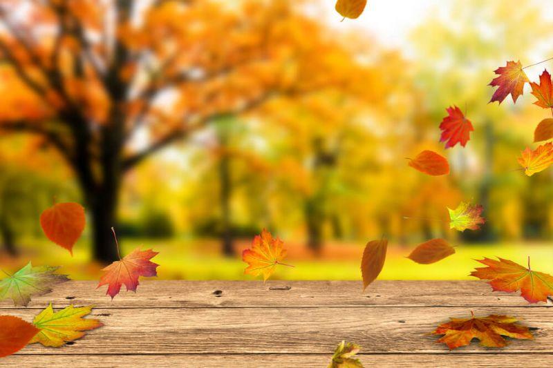 A boa do Outono